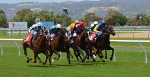 Paardenrennen Paddy Power